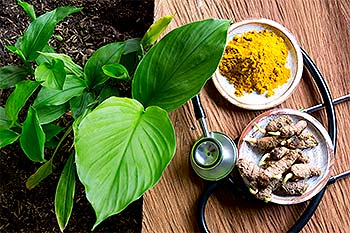 turmeric plant with stethoscope